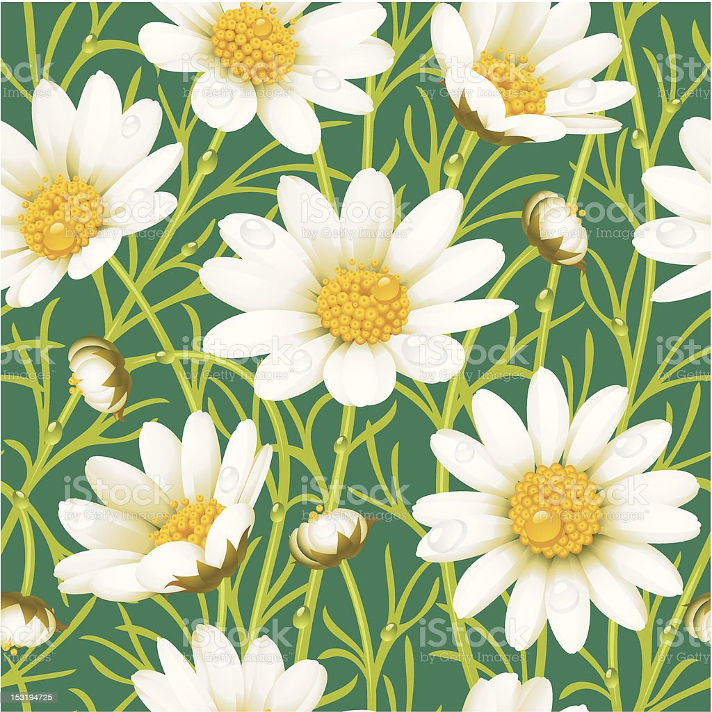 Camomile seamless background royalty-free stock vector art