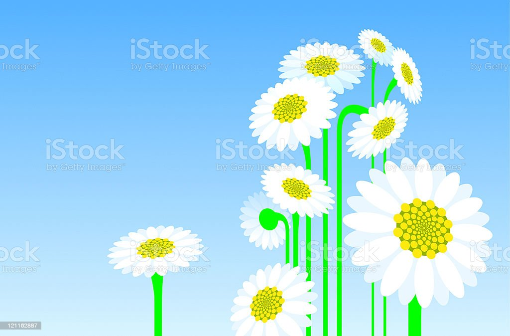 Camomiles royalty-free stock vector art