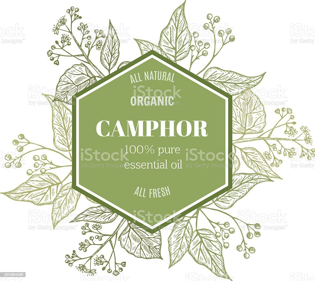 Camphor template vector art illustration