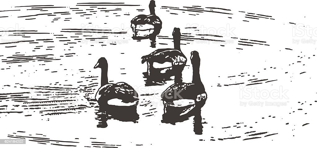 Canada Geese Floating On A Lake vector art illustration