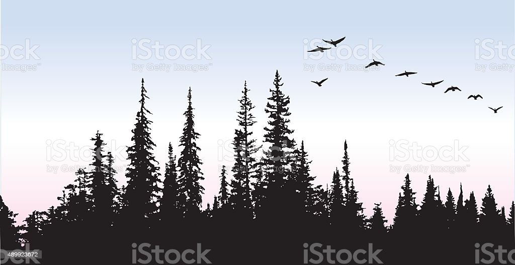 Canadian Geese Glying Above The Trees vector art illustration