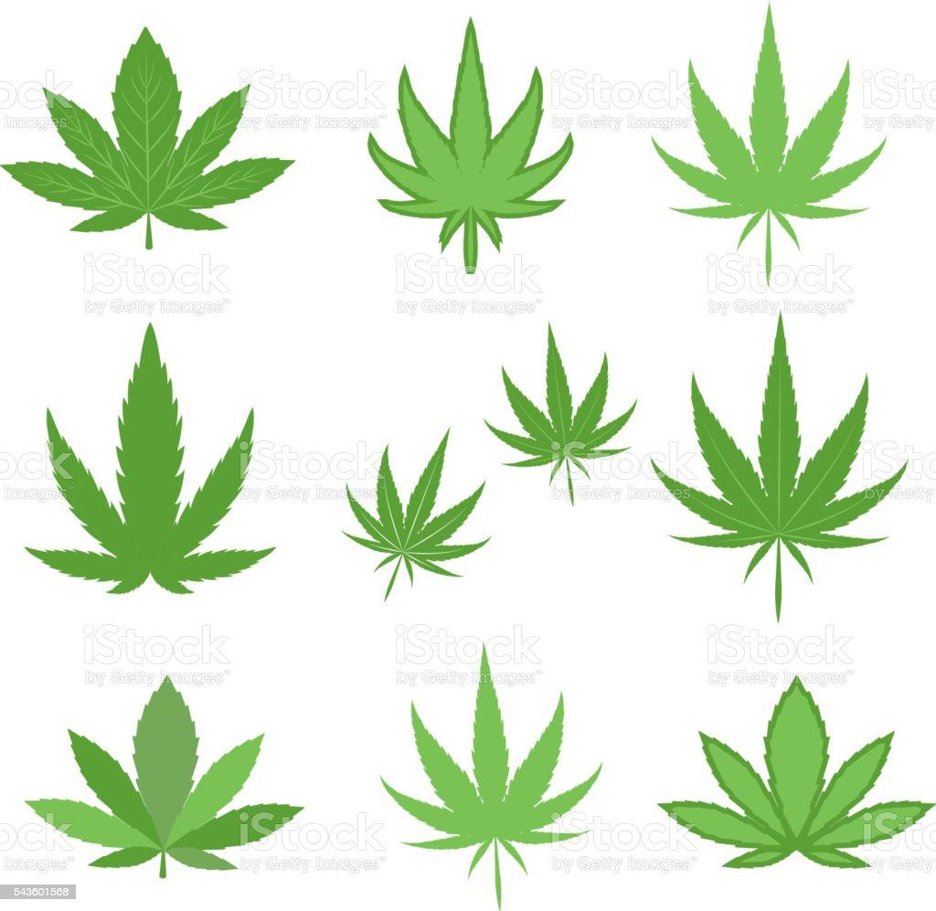 Cannabis marijuana leaf vector illustration. vector art illustration