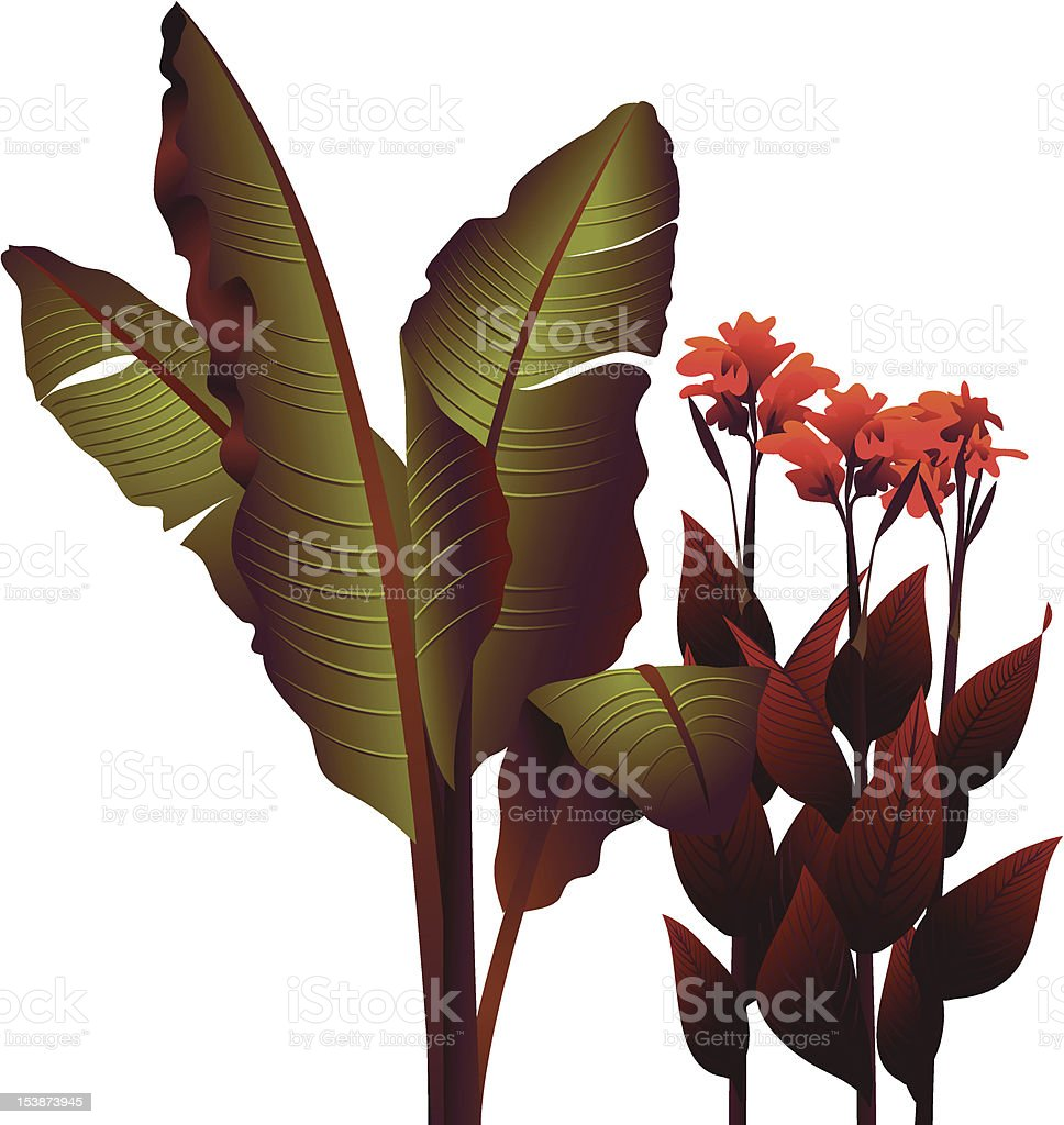 cannas, bananas royalty-free stock vector art