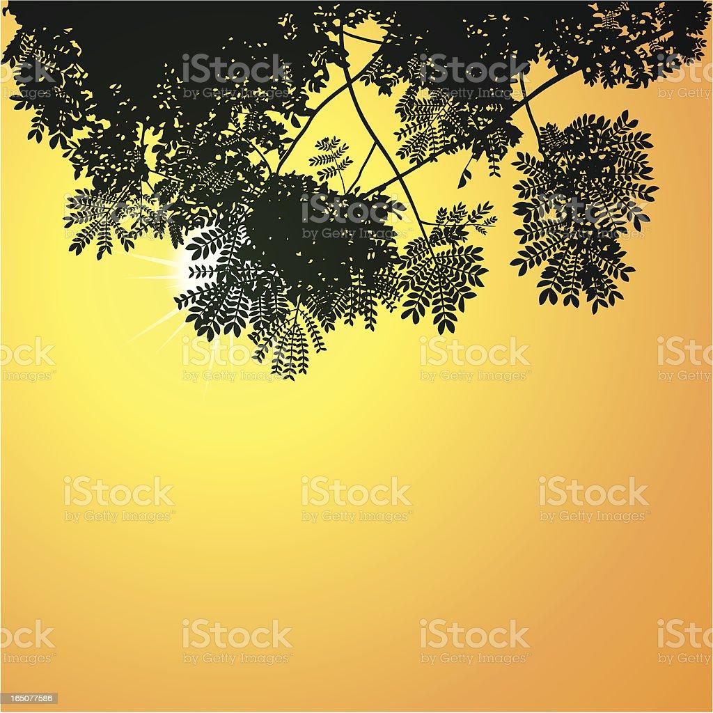 Canopy vector art illustration