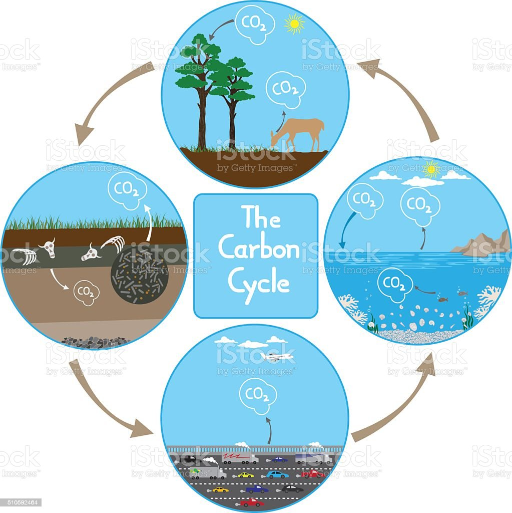 Carbon Cycle in nature vector art illustration