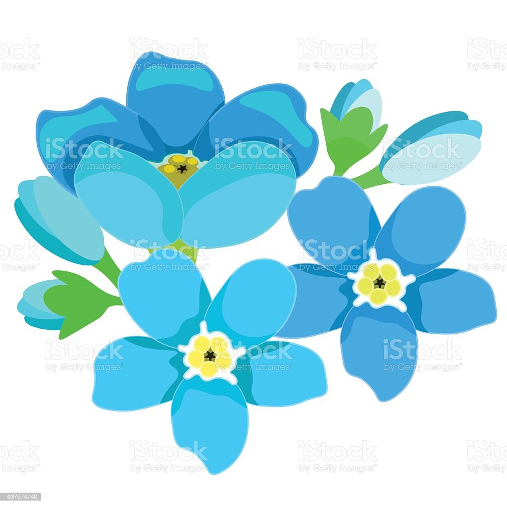card of forget-me-alpine a wild flower  vector illustration vector art illustration