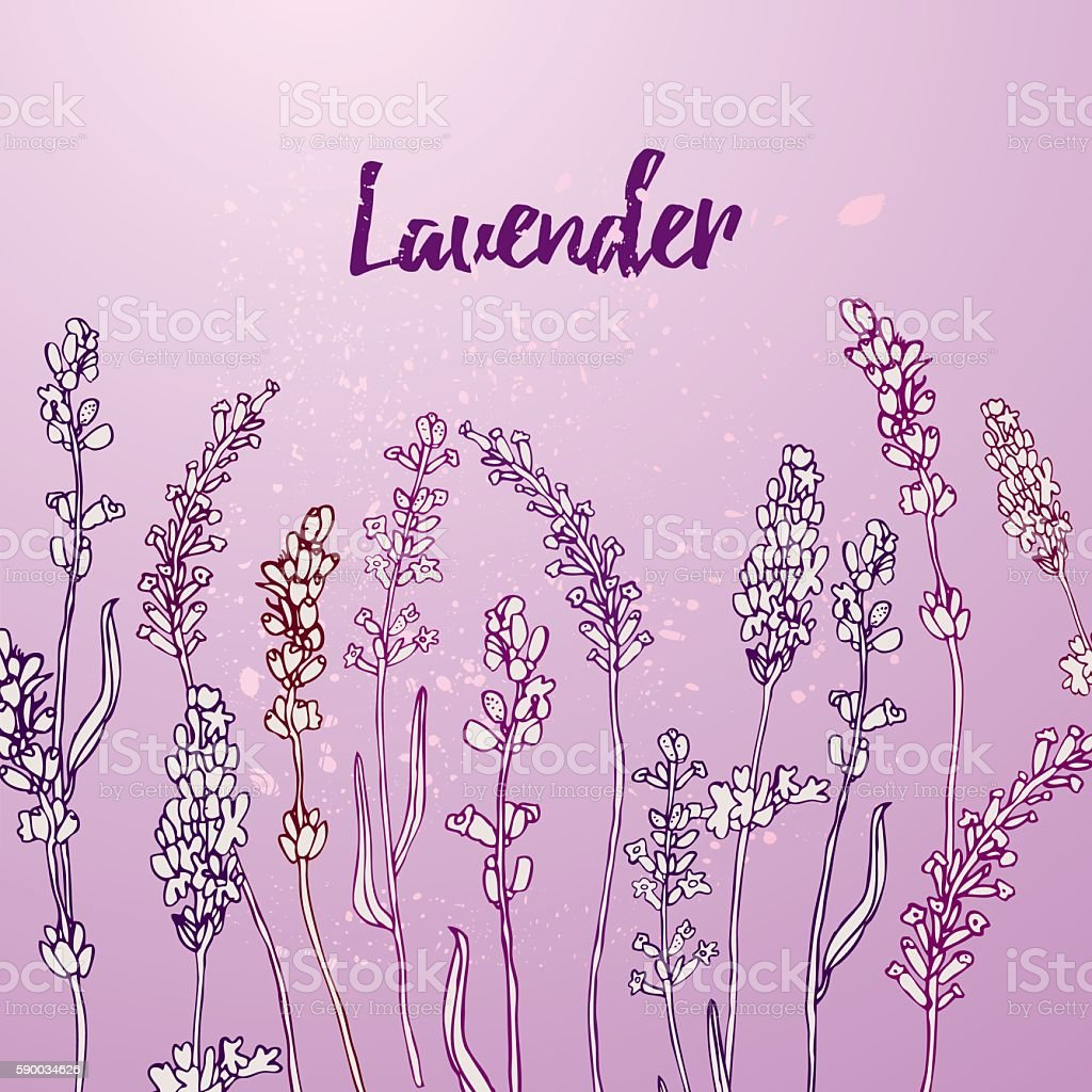 Card with lavender flowers. vector art illustration