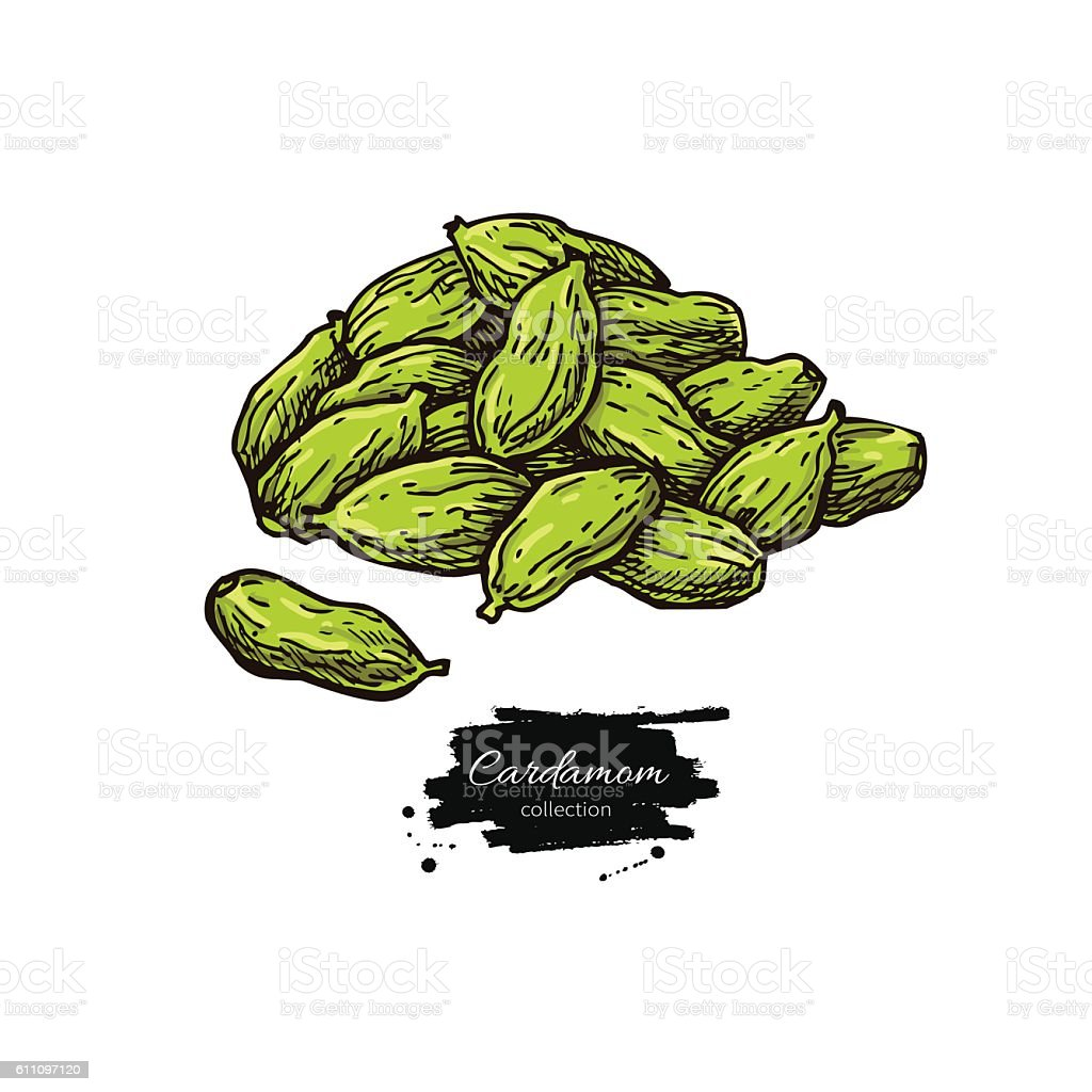 Cardamom seed heap vector hand drawn illustration. Isolated spic vector art illustration
