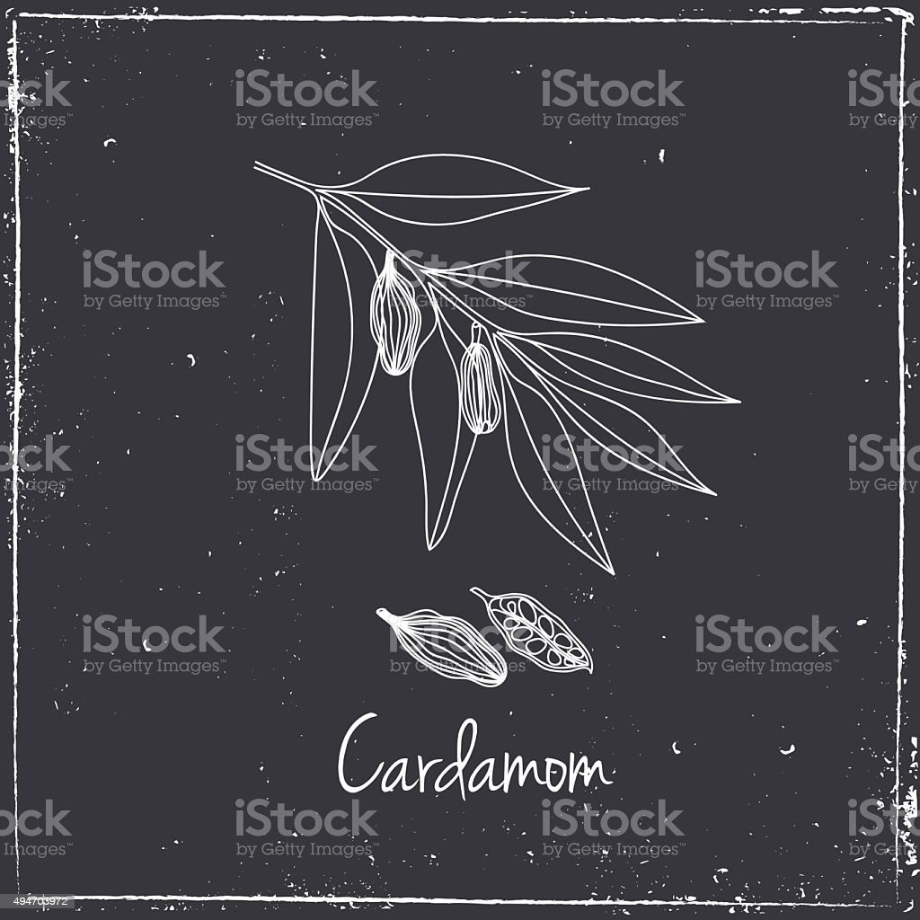 Cardamon, Herbs and Spices. vector art illustration