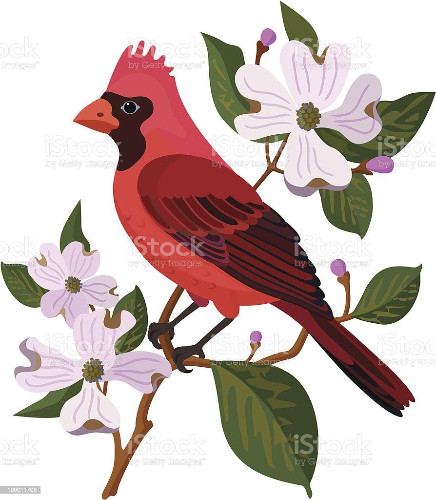 cardinal and dogwood royalty-free stock vector art
