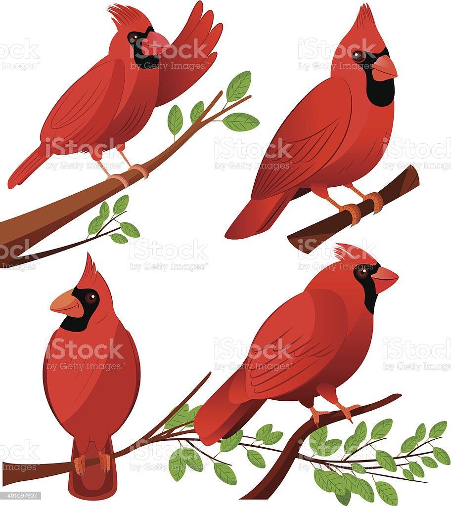 Cardinal Birds royalty-free stock vector art