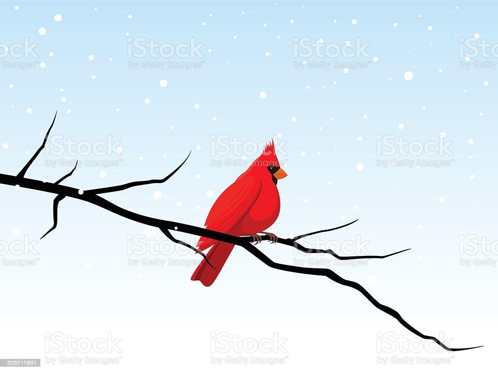Cardinal on a Branch vector art illustration