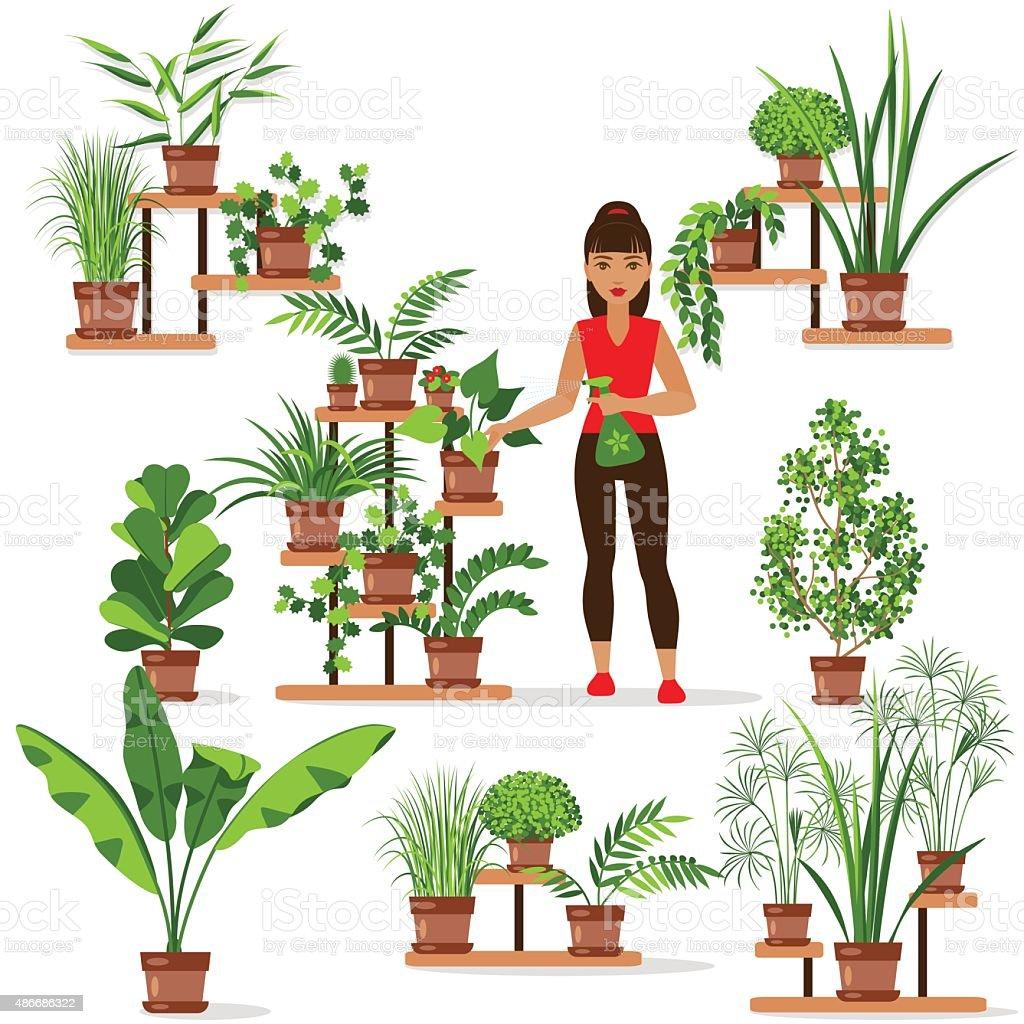 Caring for houseplants. vector art illustration