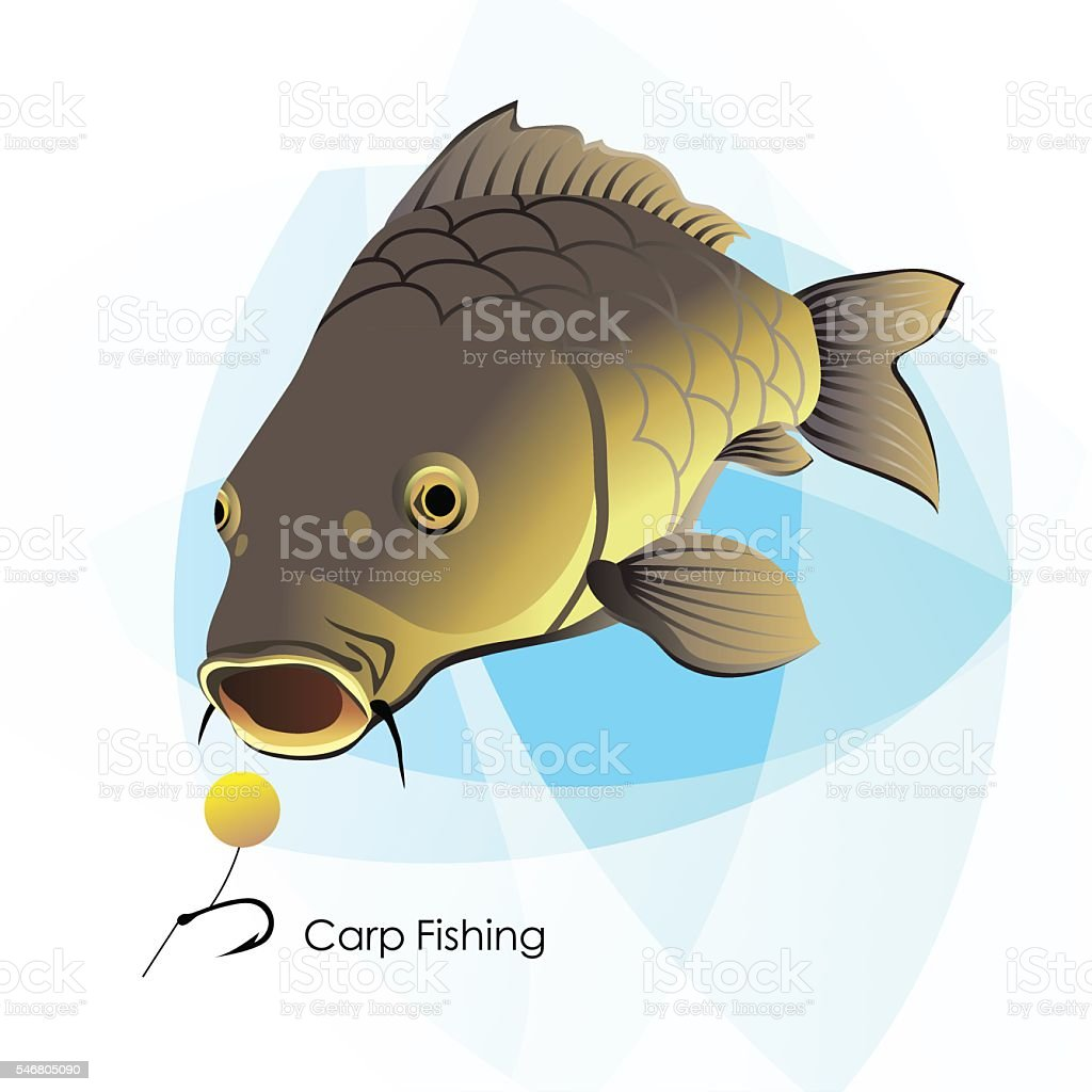 Carp Fishing vector art illustration