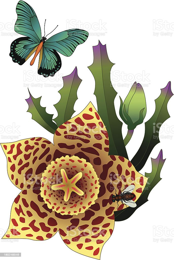 carrion flower and butterfly royalty-free stock vector art