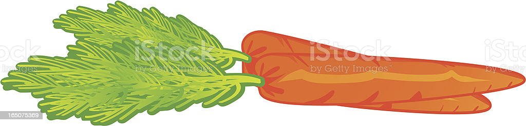 Carrots. royalty-free stock vector art