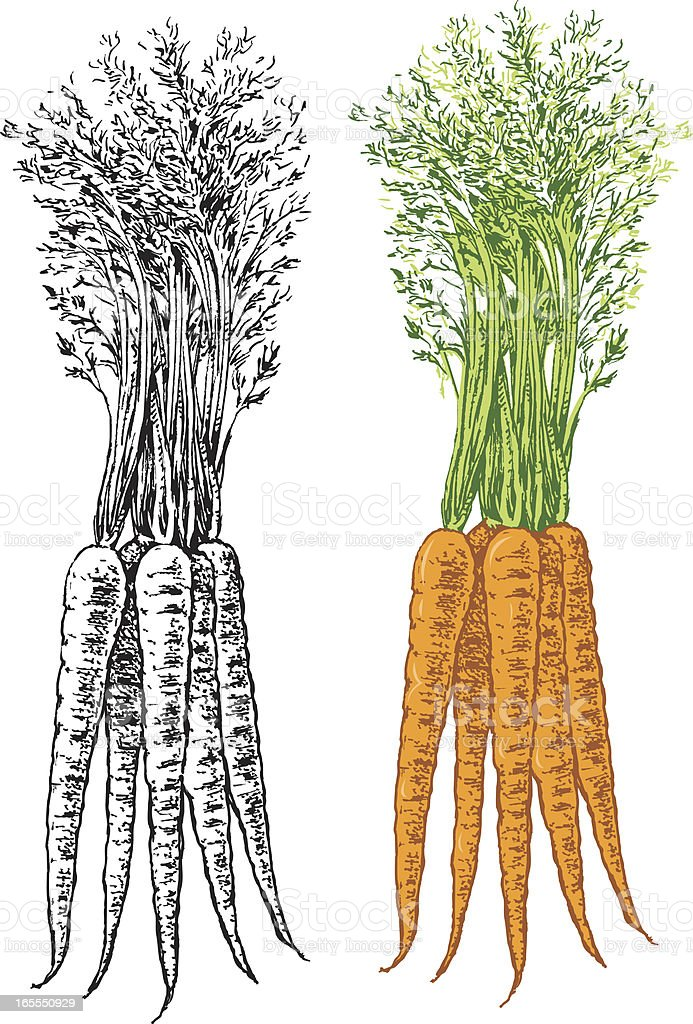 Carrots Vegetable royalty-free stock vector art