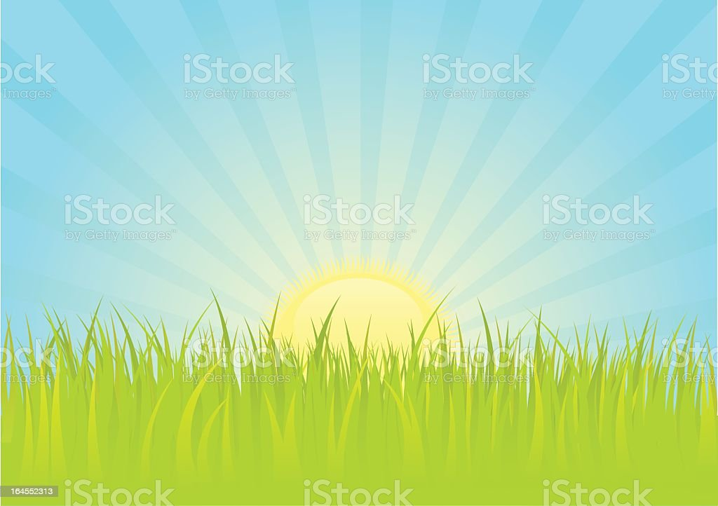 Carton illustration of a sunrise above bright green grass royalty-free stock vector art
