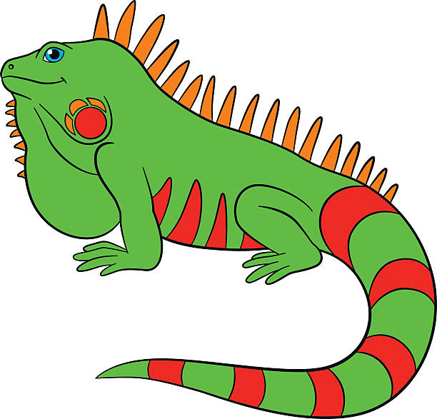 iguana clip art vector images amp illustrations istock