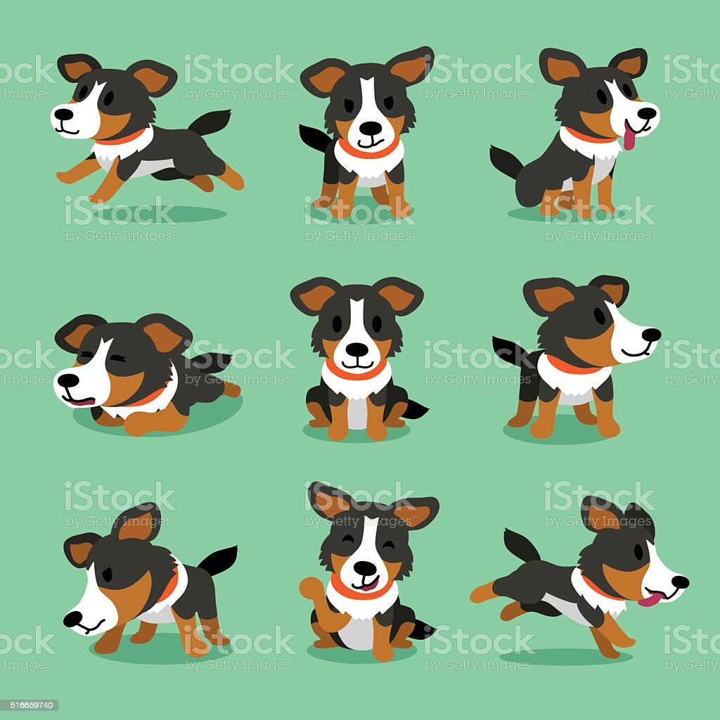 Cartoon character american shepherd dog poses vector art illustration