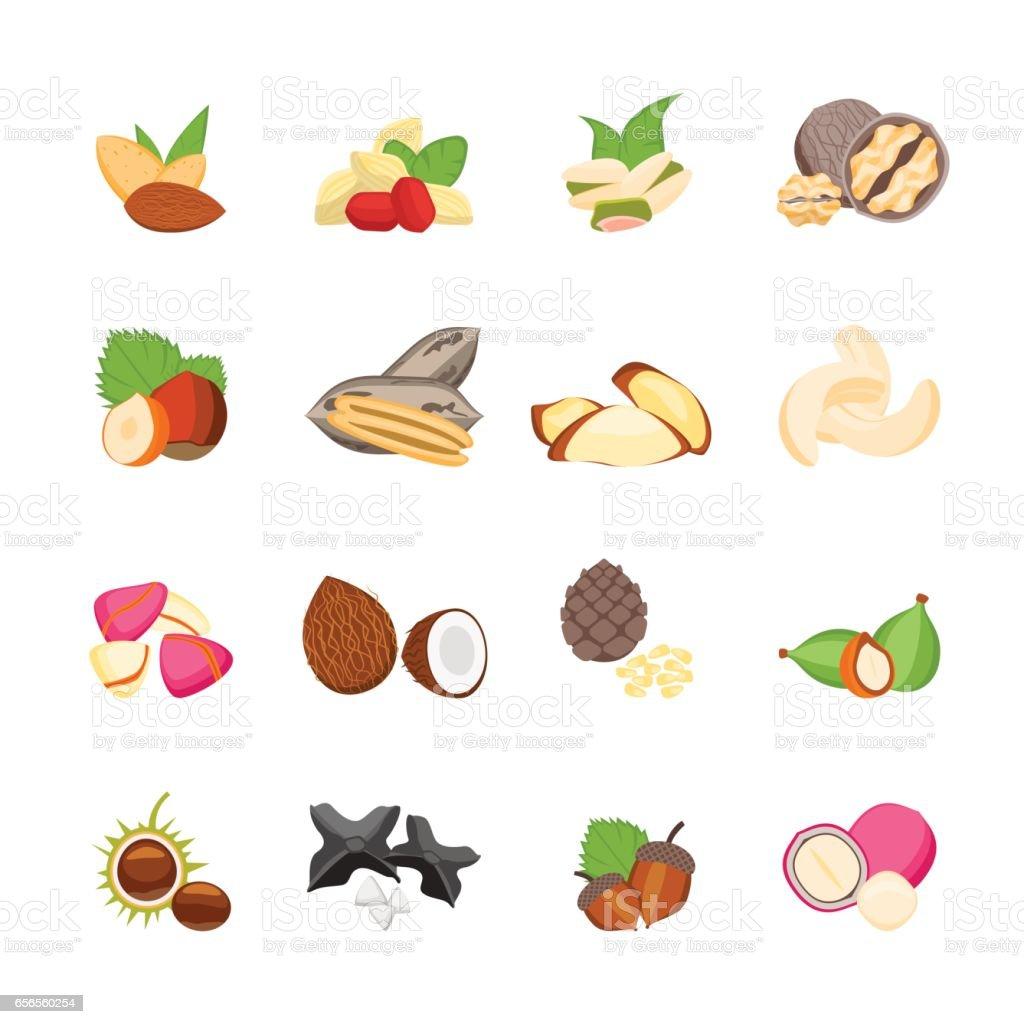 Cartoon Color Nuts Icons Set. Vector vector art illustration