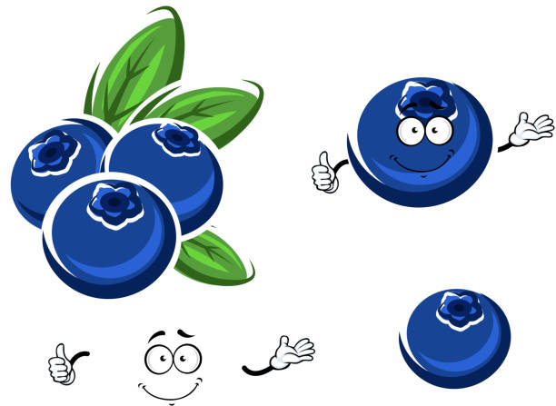 Blueberry Clip Art, Vector Images & Illustrations - iStock