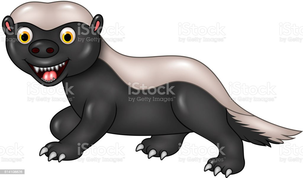 Cartoon funny honey badger isolated on white background vector art illustration
