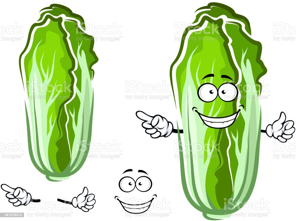 Cartoon green chinese cabbage vegetable vector art illustration