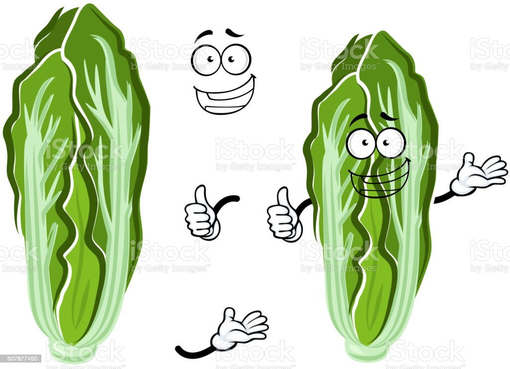 Cartoon happy chinese cabbage vegetable vector art illustration