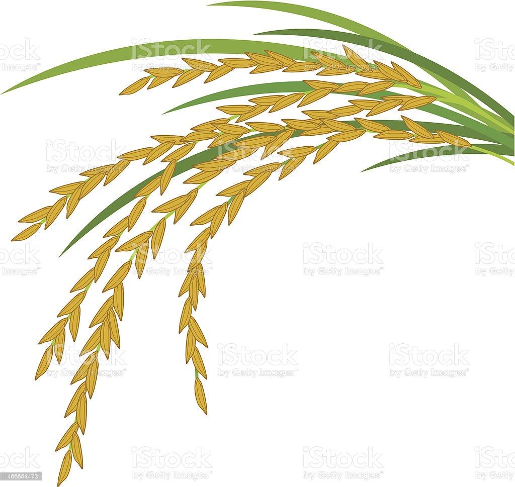 A cartoon illustration of a rice plant vector art illustration