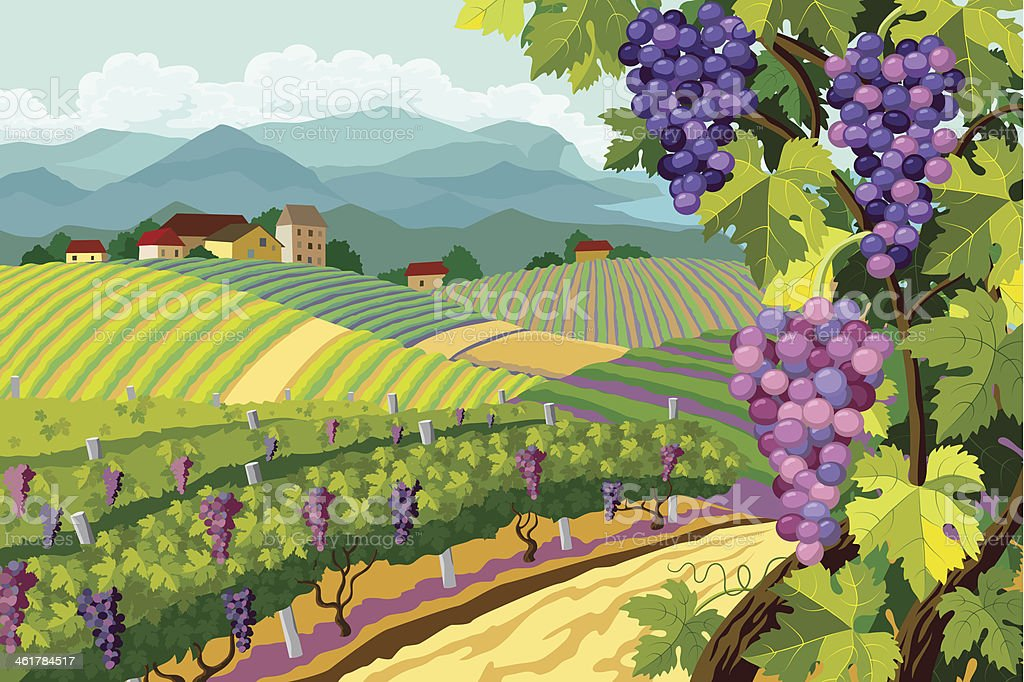 Cartoon image of a vineyard with purple grapes vector art illustration