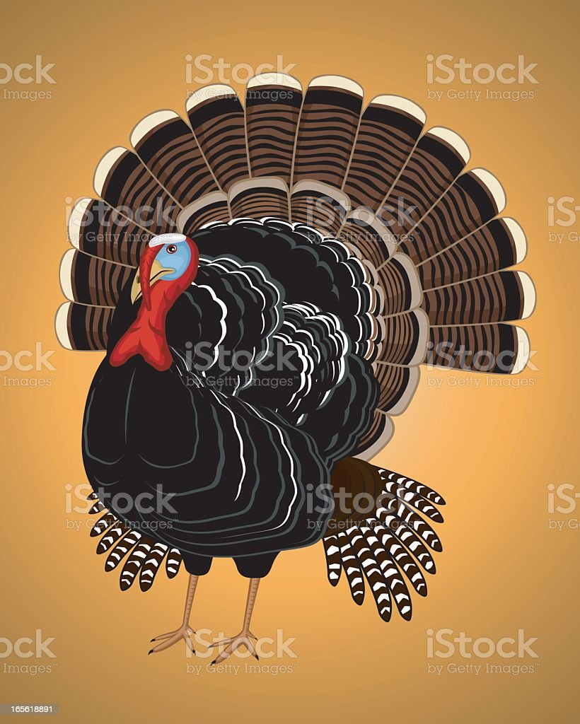 Cartoon image of a wild turkey on an orange background royalty-free stock vector art
