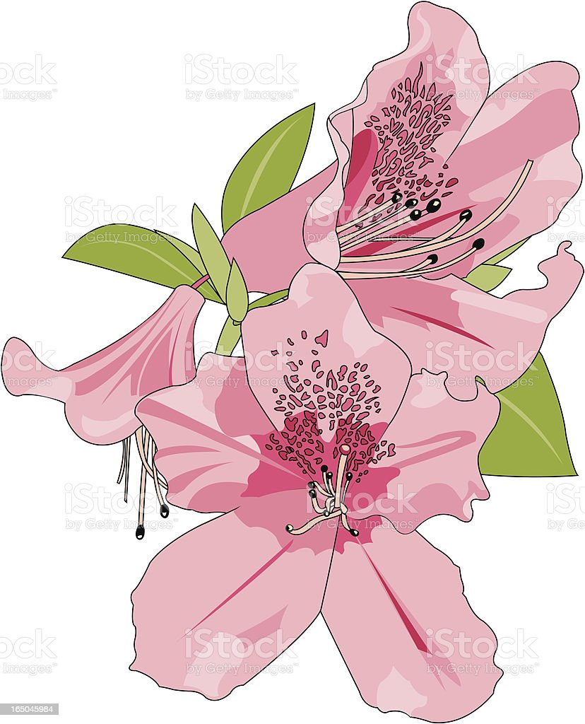 A cartoon image of pink azaleas on a white background vector art illustration