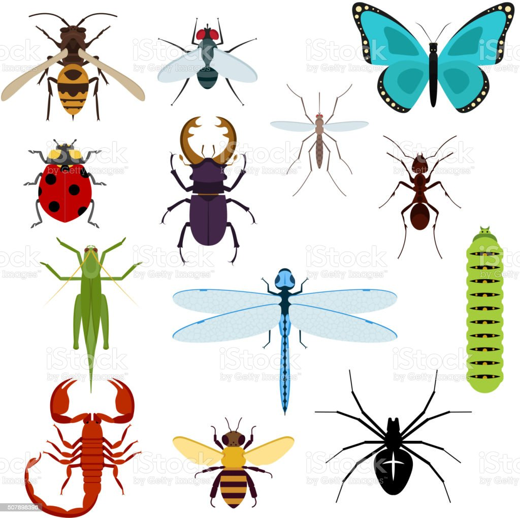 Cartoon isolated colorful insects set vector art illustration