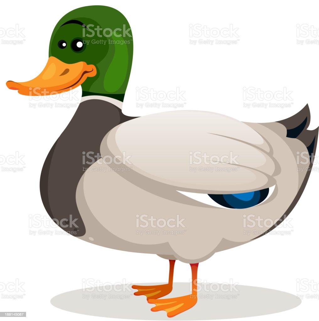 Cartoon Mallard Duck royalty-free stock vector art