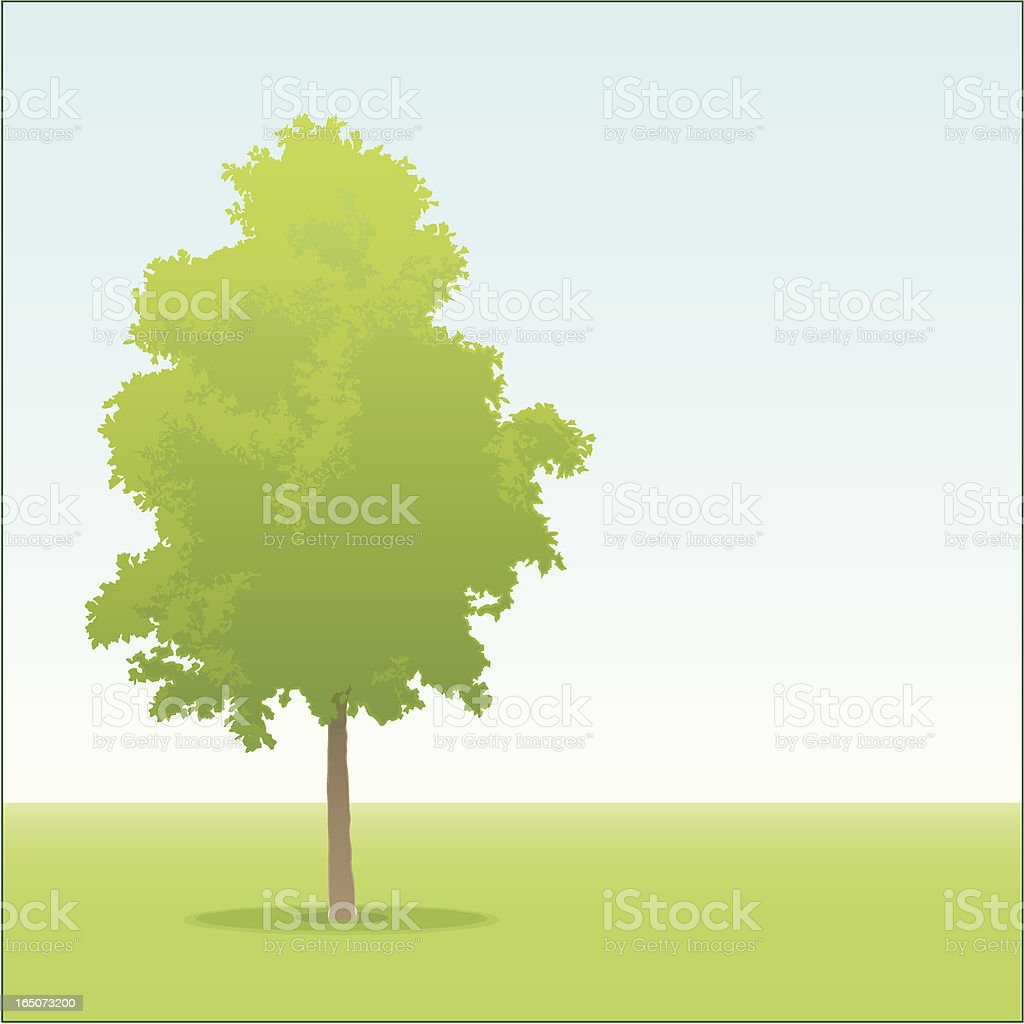 A cartoon of a young oak tree in a park royalty-free stock vector art