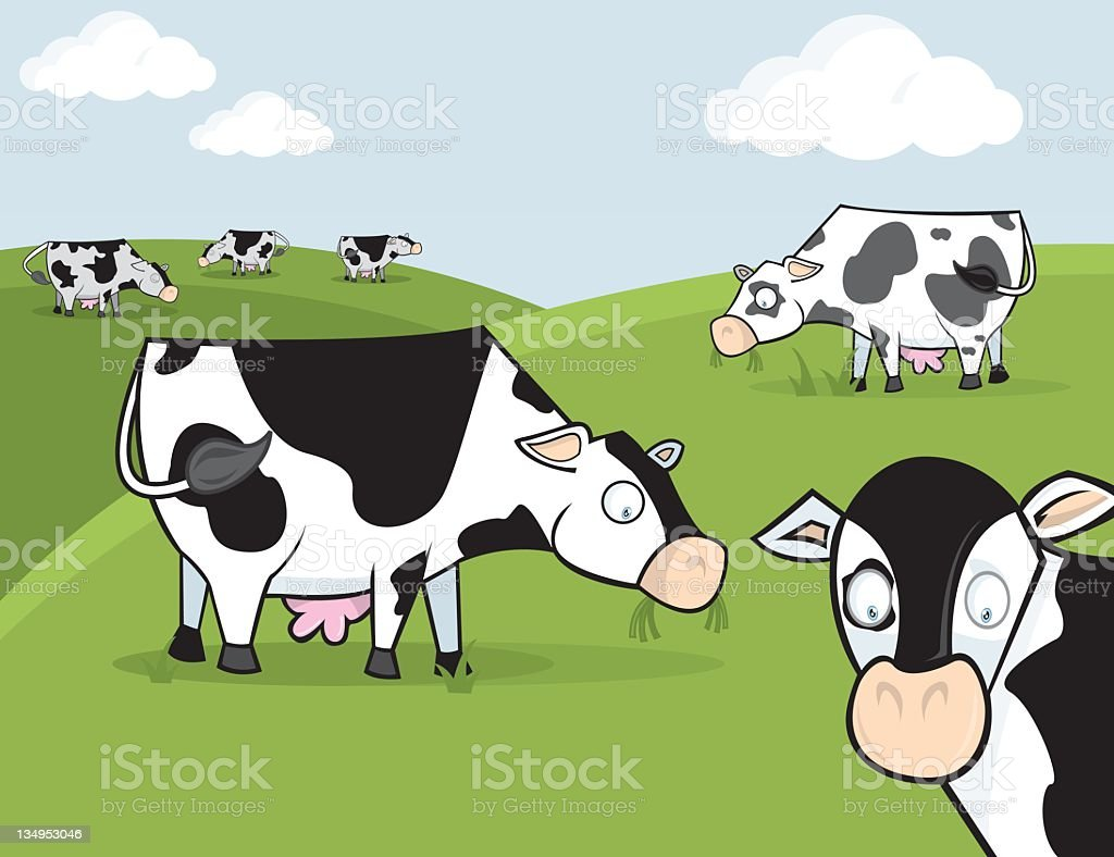 Cartoon of black and white cows grazing in a paddock royalty-free stock vector art