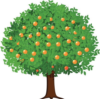 Orange Tree Clip Art, Vector Images & Illustrations - iStock