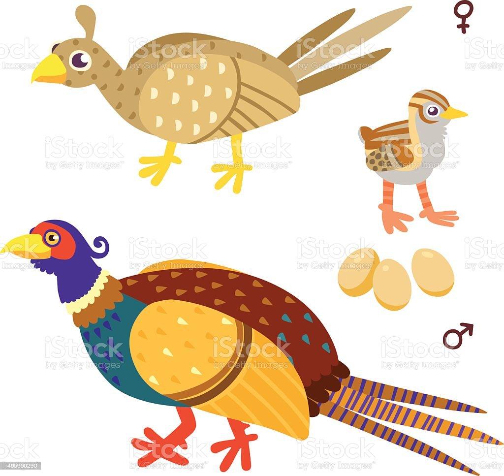 cartoon pheasant family vector art illustration