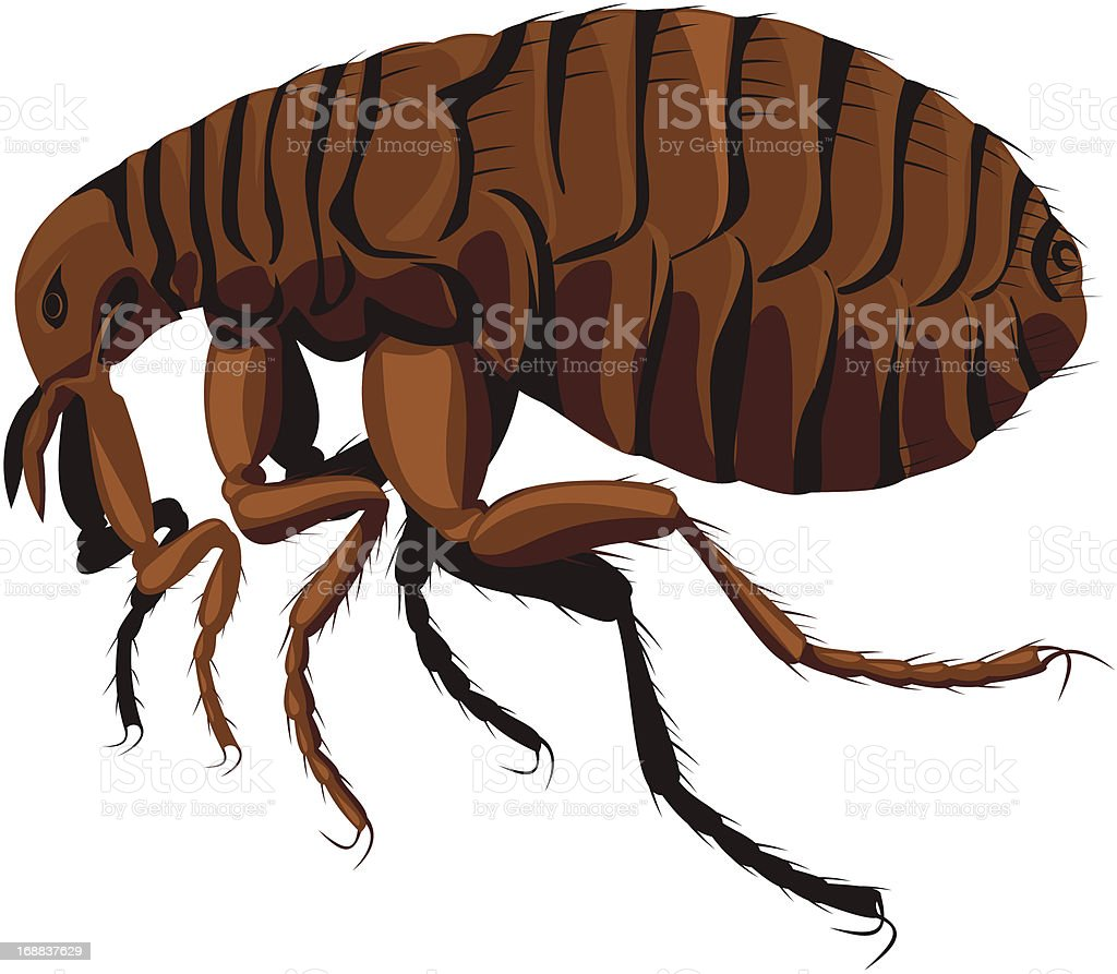 Cartoon rendering of a brown flea on a white background vector art illustration