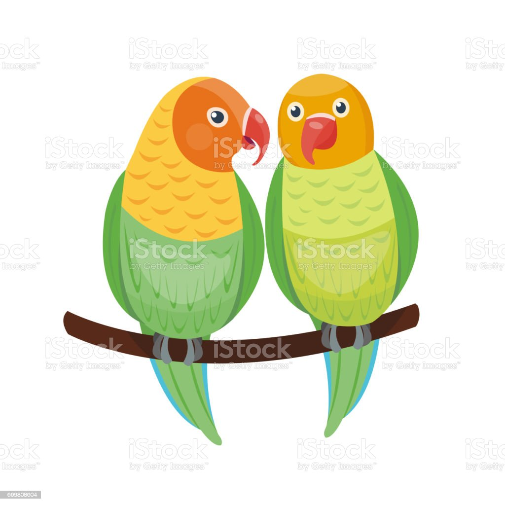 Cartoon tropical lovebird parrot wild animal bird vector illustration...
