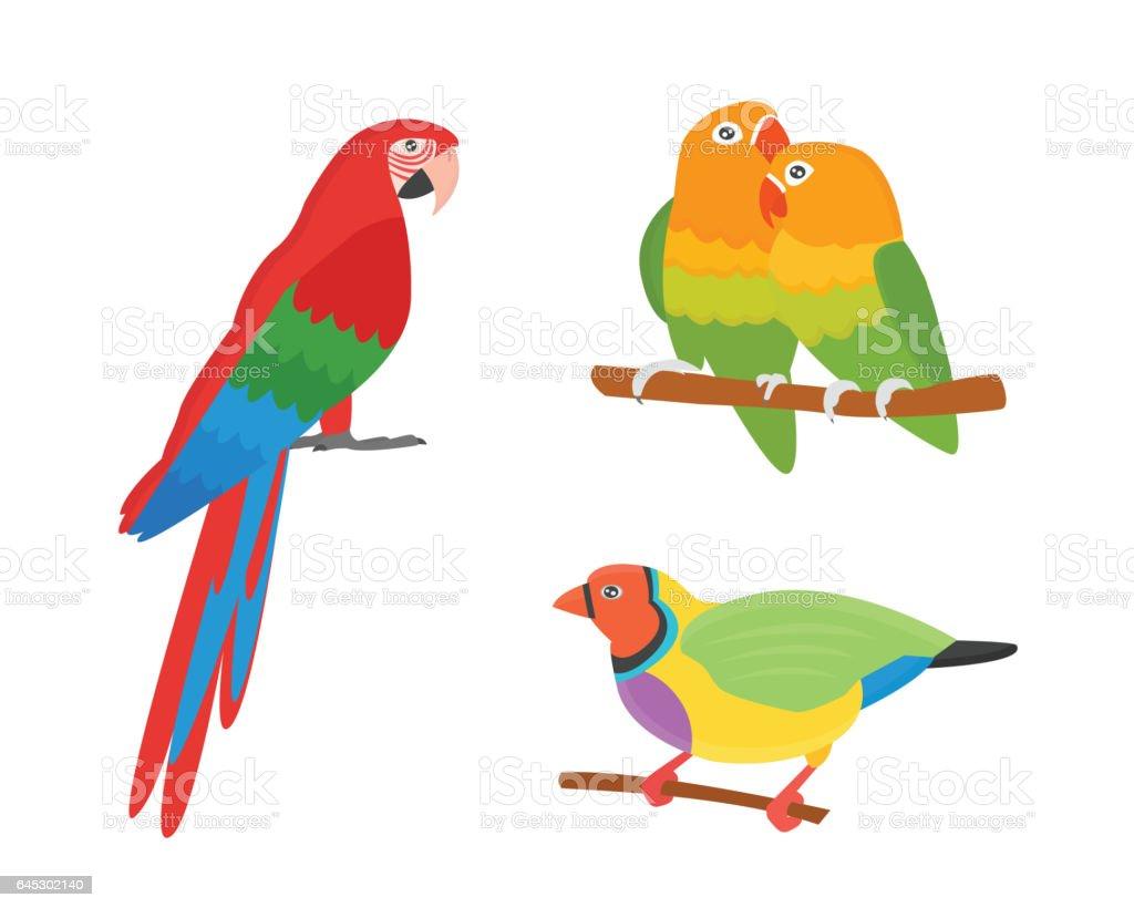 Cartoon tropical parrot wild animal bird vector illustration....