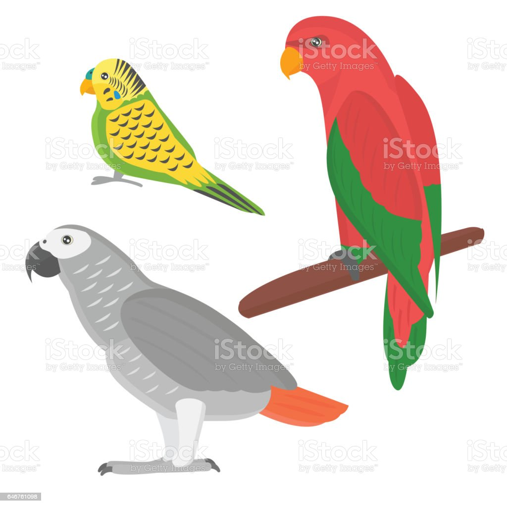 Cartoon tropical parrot wild animal bird vector illustration....