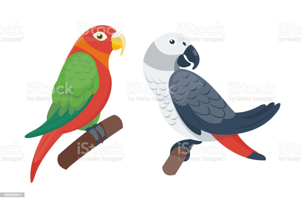 Cartoon tropical parrot wild animal bird vector illustration wildlife...