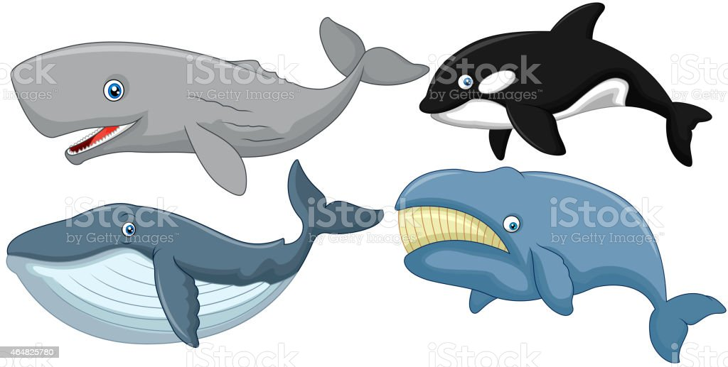 Cartoon whale collection vector art illustration