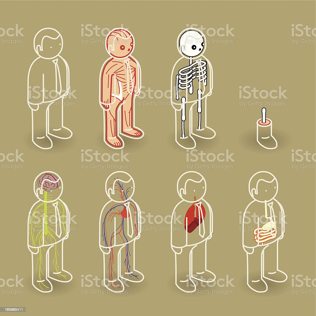 Cartoons of people with different highlighted organs vector art illustration