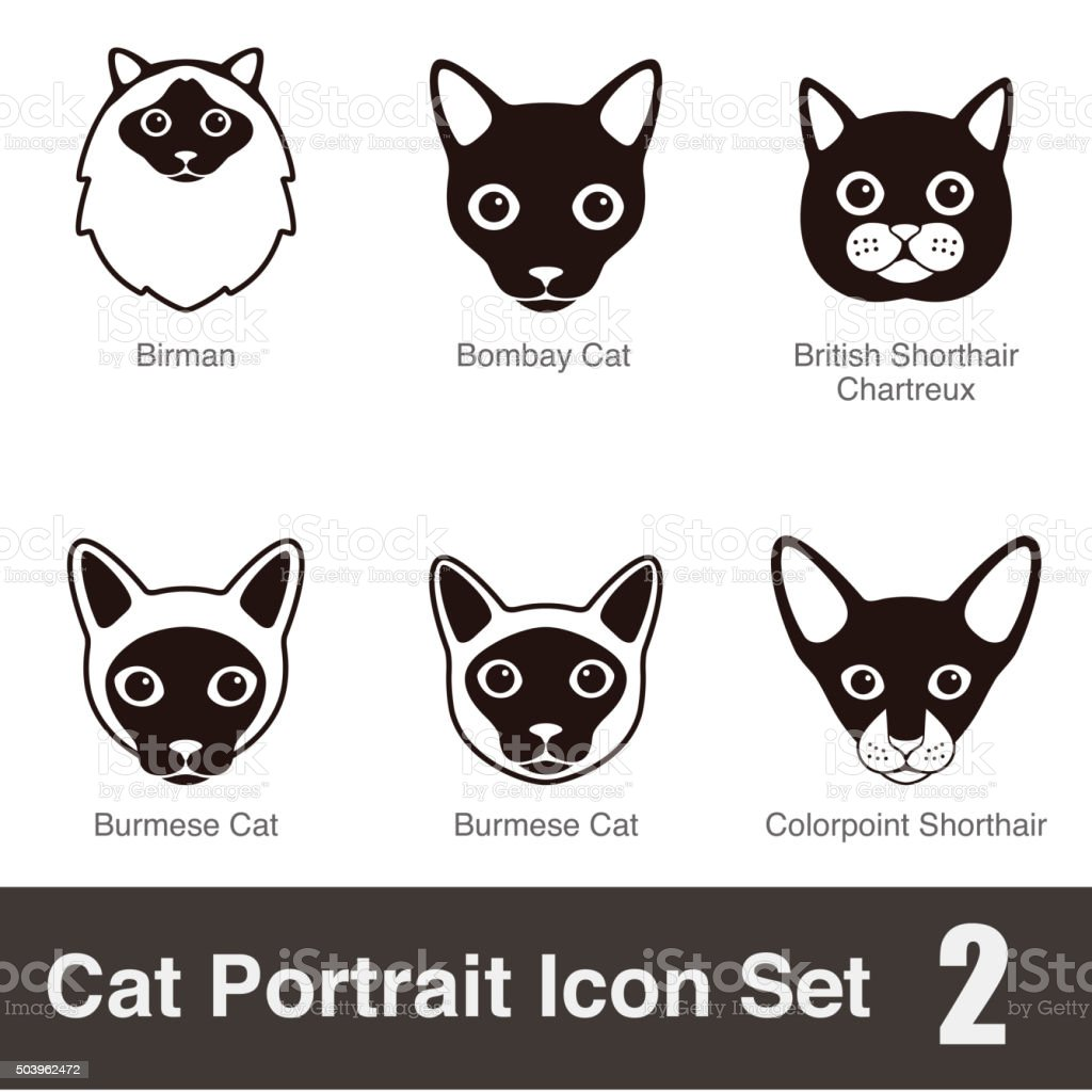 Cat breed face cartoon flat icon set series vector art illustration
