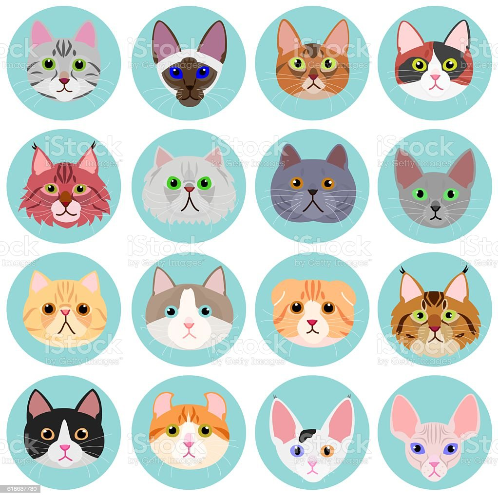 cat face set with circle vector art illustration