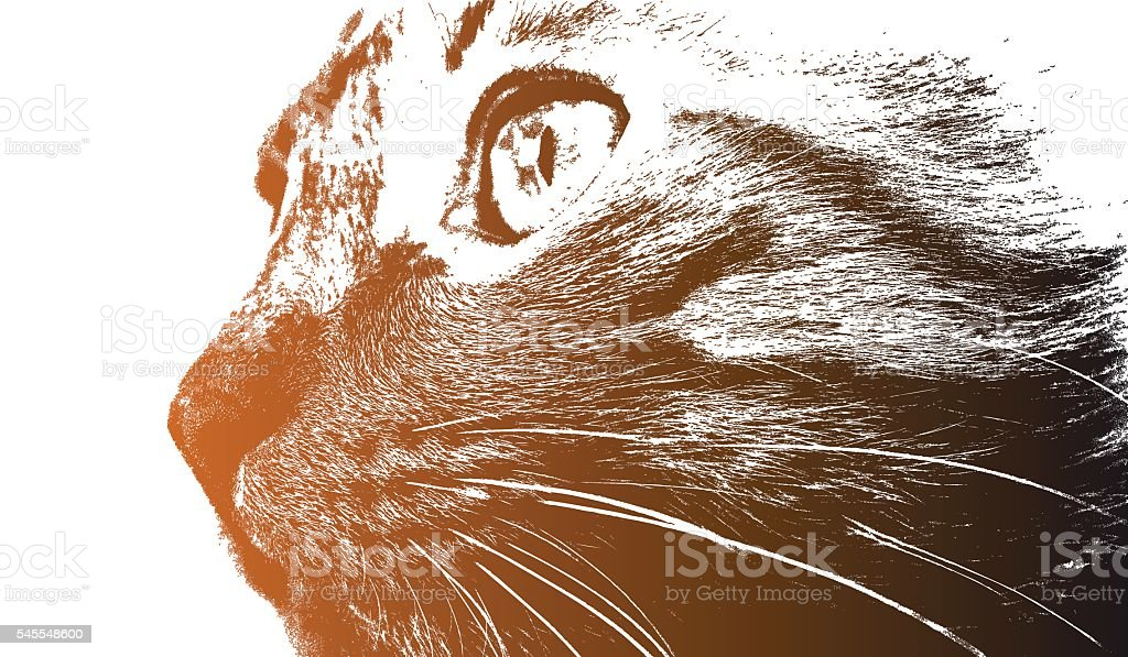 Cat look vector art illustration