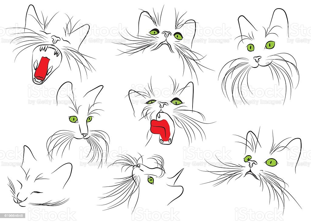 Cat muzzle with long whiskers isolated on the white background. vector art illustration